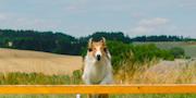 Lassie- Eine abenteuerliche Reise